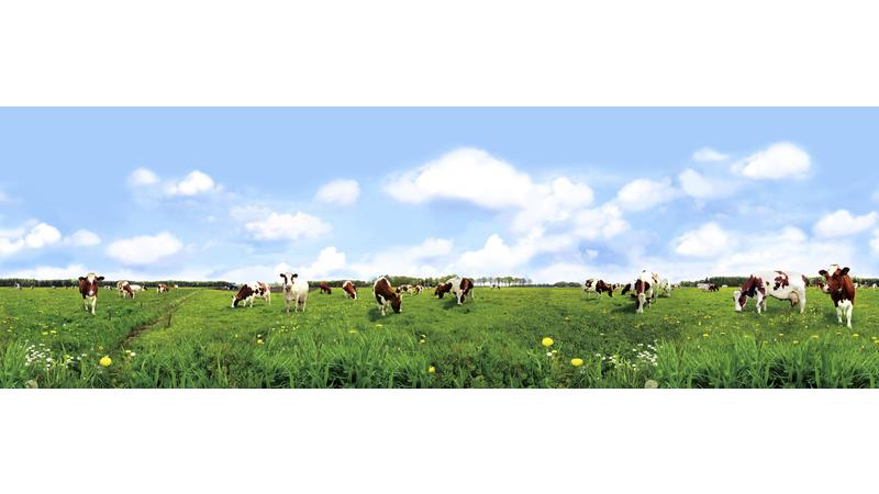 SpottedCowsintheField_vb